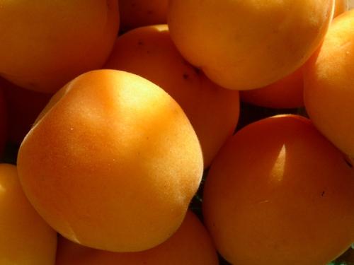 apricots_full
