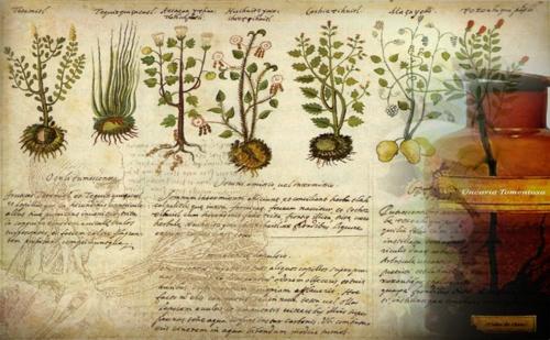 Homeopatia_01