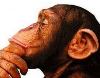 macaco (1)