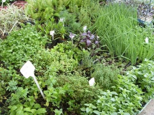 substituindo-o-sal-pelas-ervas-e-outros-temperos-4