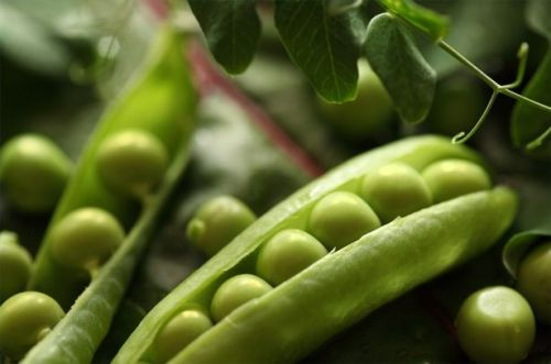article-new-thumbnail-ehow-images-a05-fb-t2-cultivate-legumes-800x800